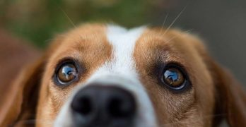 CBD Oil for Dogs and other Pets