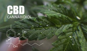 Science of Cannabidiol