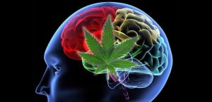 cbd for parkinsons